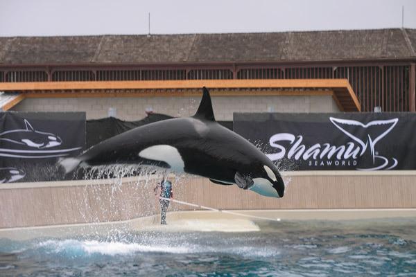 Shamu2